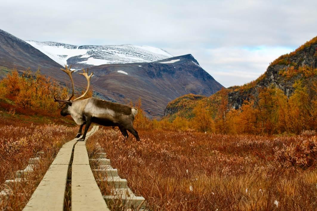 Autumn in Swedish Lapland