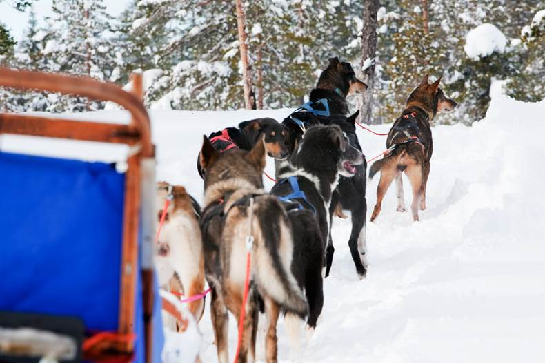 Get close to nature with a husky sledge tour