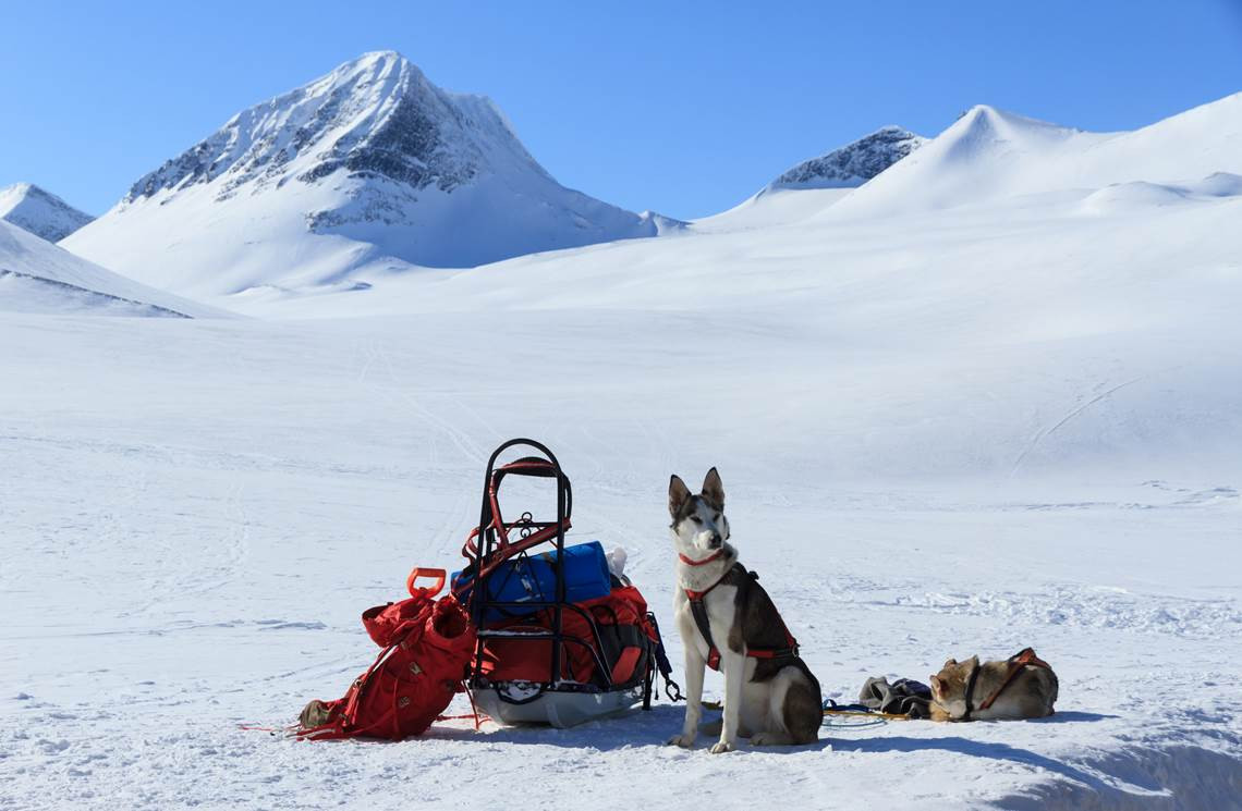 Join a husky tour in Lapland